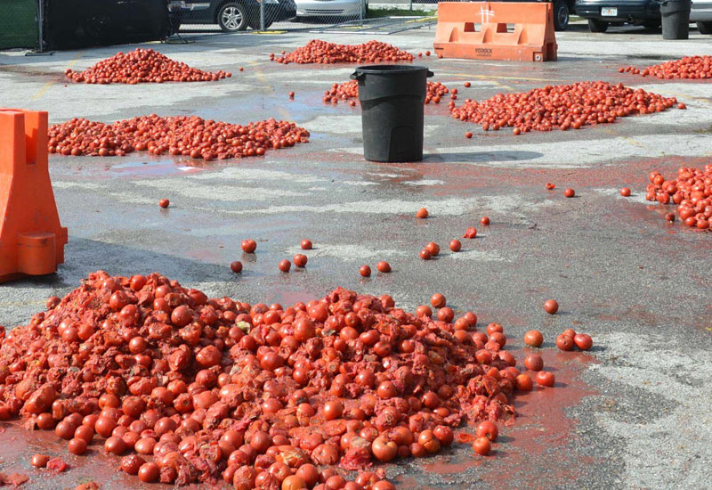 tomato throwing festival